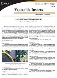 Cucurbit Insect Management