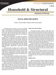 Social Bees and Wasps