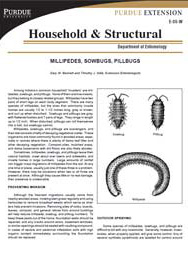 Millipedes, Sowbugs, Pillbugs