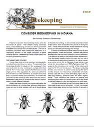 Consider Beekeeping in Indiana