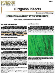Turfgrass Insect Management