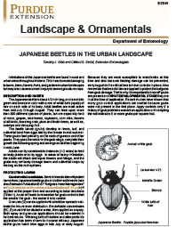 Landscape & Ornamentals: Japanese Beetles in the Urban Landscape