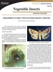 Management of Insect Pests on Fresh Market Tomatoes