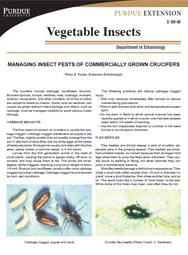Managing Insect Pests of Commercially Grown Crucifers