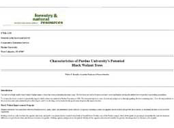 Characteristics of Purdue University's Patented Black Walnut Trees