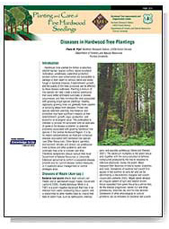 Diseases in Hardwood Tree Plantings