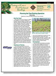 Planning the Tree Planting Operation