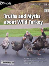 Truths and Myths about Wild Turkey