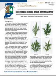 Selecting an Indiana-Grown Christmas Tree
