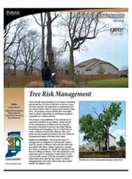 Tree Risk Management