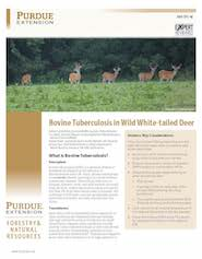 Bovine Tuberculosis in Wild White-tailed Deer