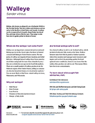 Walleye Farmed Fish Fact Sheet: A Guide for Seafood Consumers