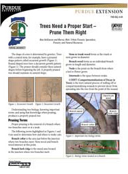 Trees Need a Proper Start: Prune Them Right