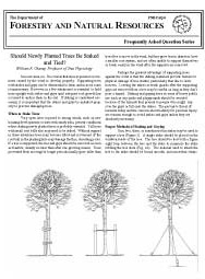 Should Newly Planted Trees Be Staked and Tied?