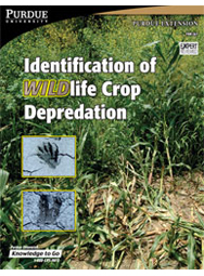 Identification of WILDlife Crop Depredation