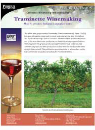 Commercial Winemaking Production Series: Traminette Winemaking