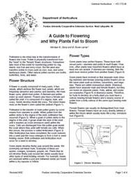Guide to Flowering and Why Plants Fail to Bloom