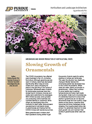 Slowing Growth of Ornamentals for Holding Plants in Greenhouses