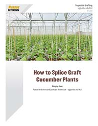 How to Splice Graft Cucumber Plants
