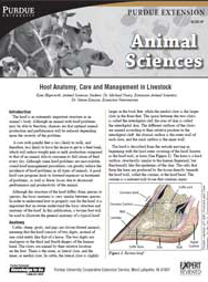 Hoof Anatomy, Care and Management in Livestock