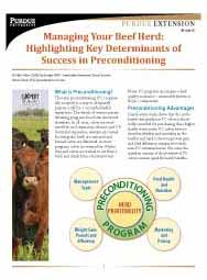 Managing Your Beef Herd: Highlighting Key Determinants of Success in Preconditioning