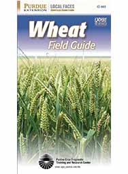 Wheat Field Guide (25/Box)
