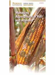 Managing Aspergillus Ear Rot and Aflatoxin