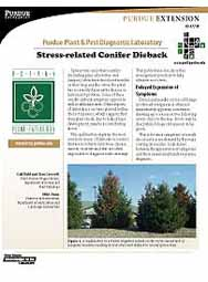 Stress-related Conifer Dieback