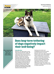 Does long-term tethering of dogs negatively impact their well-being?