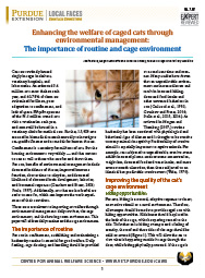 Caged cats — Importance of routine and cage environment
