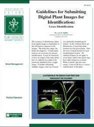 Guidelines for Submitting Digital Plant Images for Identification: Grass Identification