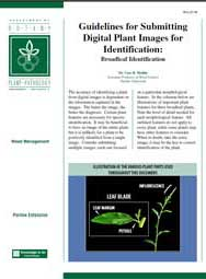 Guidelines for Submitting Digital Plant Images for Identification: Broadleaf Identification