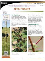 Weed Management in Pastures: Spiny Pigweed