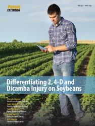 Differentiating 2, 4-D and Dicamba Injury on Soybeans