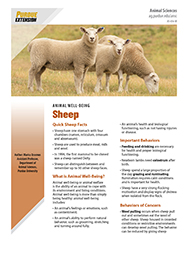 Sheep Well-Being Basics