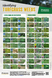 Identifying Turfgrass Weeds Poster